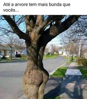 aline árvore